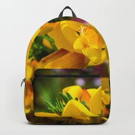 Scotch Broom Backpack
