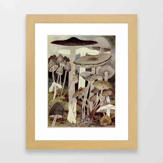 Vintage Mushroom Diagram by bluespecsstudio
