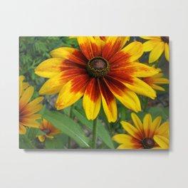 Flower   Flowers   Yellow Gaillardia Daisy   Nature Photography Metal Print