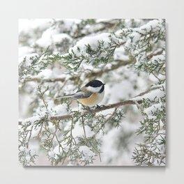 Snowstorm Chickadee Metal Print