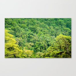 The Rainforest Contains a Million Shades of Green Canvas Print