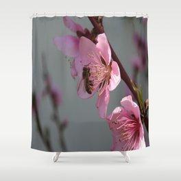Honey Bee On Open Peach Tree Blossom Shower Curtain