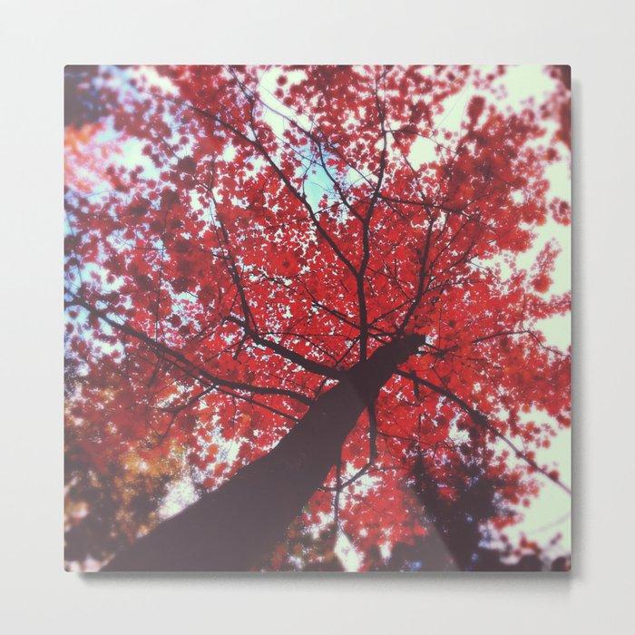 Autumn Red 2 Metal Print
