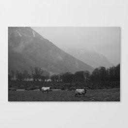 Sheep of Scotland Canvas Print