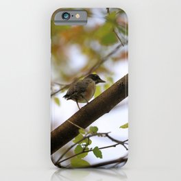 Baby Robin in A Maple Tree iPhone Case