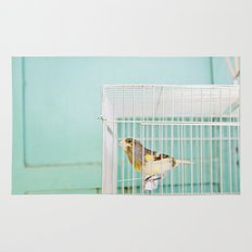 Finch against Turquoise Wall, Jerusalem Rug