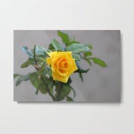 Lone Rose Metal Print