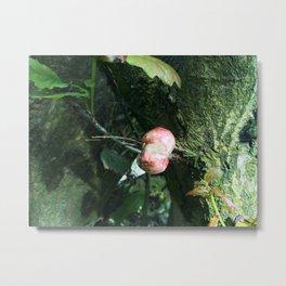 Organ Fungi Metal Print