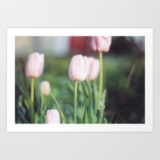 Soft Abstract Pink Tulips in Spring Film Photography Art Print