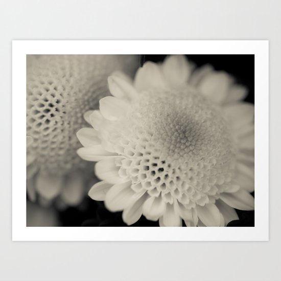 Honeycomb Daisy Flower Art Print