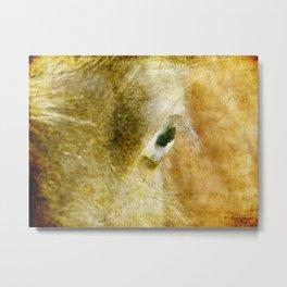 Blue Eyed Horse Metal Print
