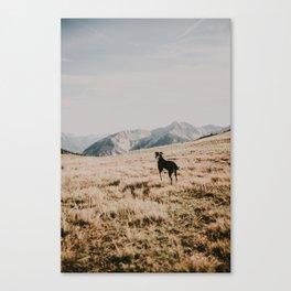 WILD TULA /// Soak it in Canvas Print