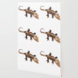 Crested Gecko Wallpaper