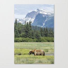 Male Brown Bear at Lake Clark NP Canvas Print