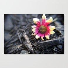 Fallen Flower Canvas Print