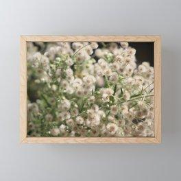 Closeup Fluffy Seed Heads Framed Mini Art Print