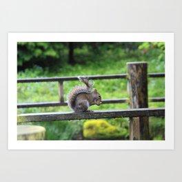 Nuts 'Bout Nuts Art Print