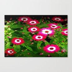 Summertime Daisies Canvas Print