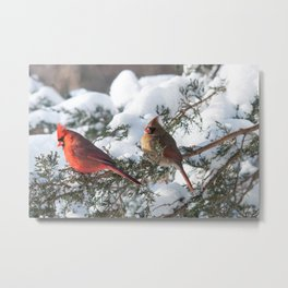 Sunny Winter Cardinals in the Adirondacks Metal Print