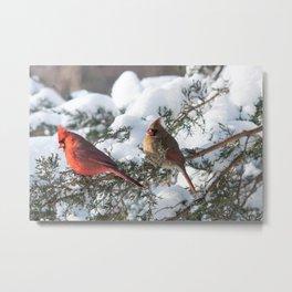 Sunny Winter Cardinals in the Adirondacks Metal Print