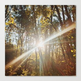 Sunburst through trees in Dundee, OR Canvas Print