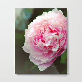 Blush Peony Neon Pink by CheyAnne Sexton Metal Print