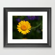 Yellow Daisy 4217 Framed Art Print