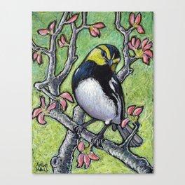 Golden Cheeked Warbler Canvas Print