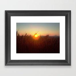Wheat Sunset Framed Art Print