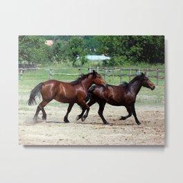 Hungarian Puszta Horses Metal Print