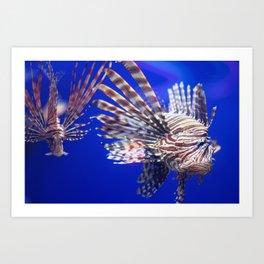Grumpy Lion Fish in the Deep Blue Sea Art Print