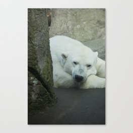 Missing the North Canvas Print
