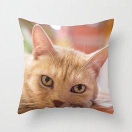 Sleeping tabby cat  Throw Pillow