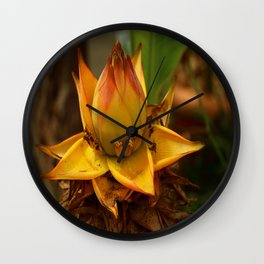 Musella Lasiocarpa - A Drawf Banana Wall Clock