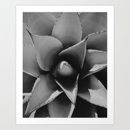 Beautiful Agave plant in Big Bend National Park Art Print
