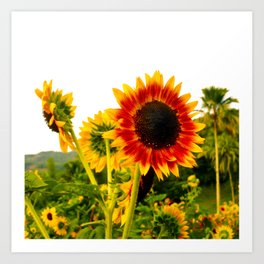 Sunflower Garden Art Print