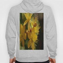 Turkish St Johns Wort Wild Flower Vector Image Hoody