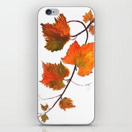 grapevine in autumn iPhone Skin