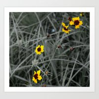 Tickweed Art Print