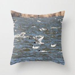 Bonaparte Gull Six Throw Pillow