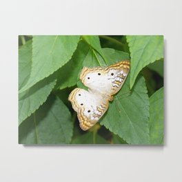 Phipps butterfly Metal Print