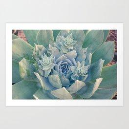 Succulent Cluster Art Print