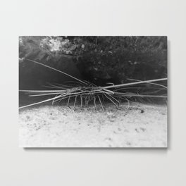 Lobster in B&W Metal Print