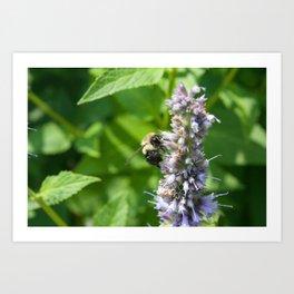 Bee in Summer Art Print