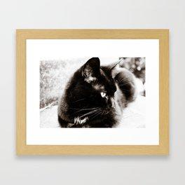 her majesty the cat Framed Art Print