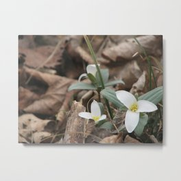 Early Spring Flowers Metal Print
