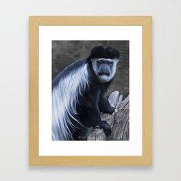 Animals: Colobus Framed Art Print