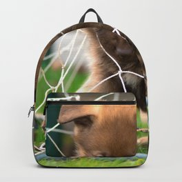 #Goalkeeper of the #new #generation #little #malinois #puppy its #angry Backpack