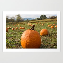 Hickory Nut Gap Farm - Pumpkins Art Print