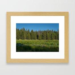 Lilypad Lake, Yellowstone National Park Framed Art Print